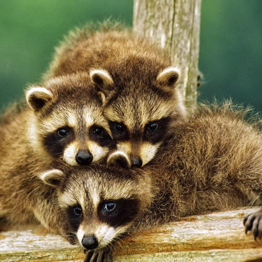 #Cute #babyanimals #animals #wildlife #animallovers # ...