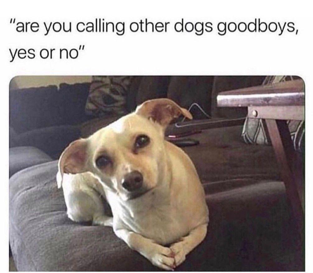 Dog Memes Of The Day 30 Pics – Ep62 #animalmemes #dogmemes #memes - Lovely Animals World #animalcaptions