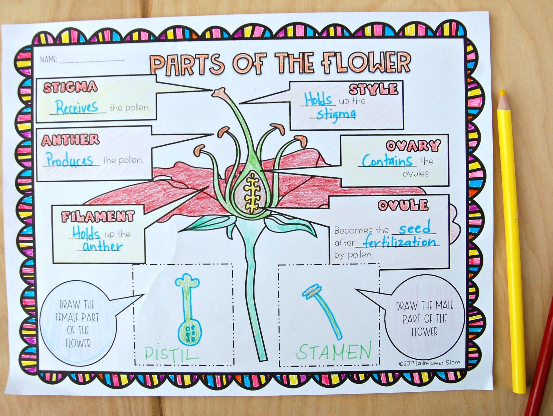 Parts Of The Flower Interactive Notebook