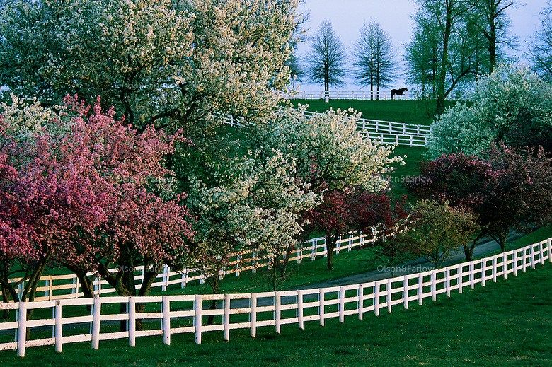 Kentucky In Spring In Pictures Crabapple Tree Kentucky Horse Farms Flowering Trees
