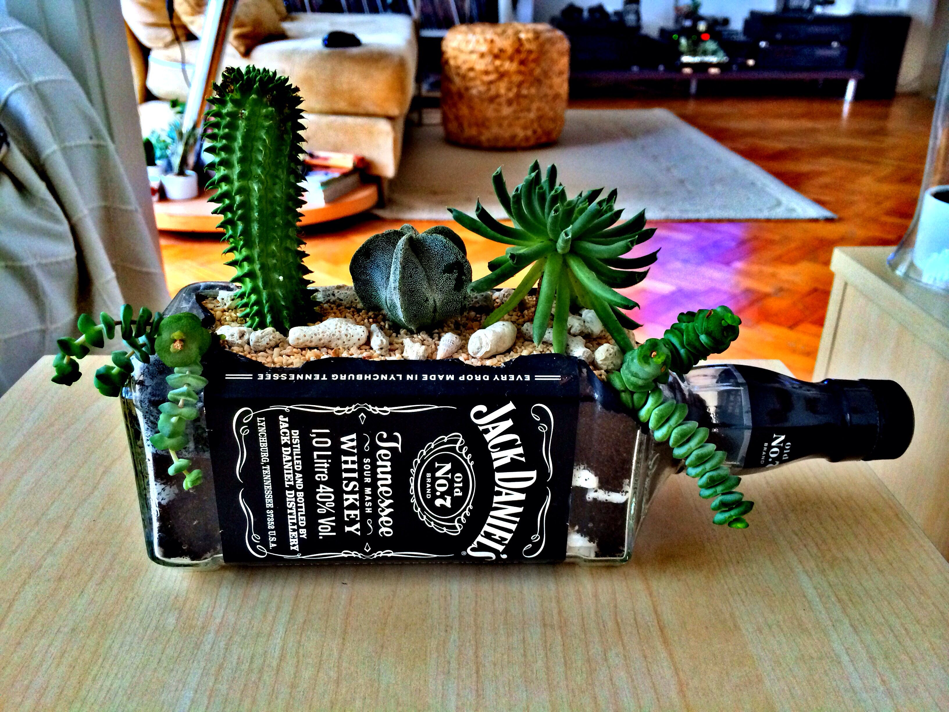 Jack daniels bottle succulents pot jack daniels bottle for Decoration 75019