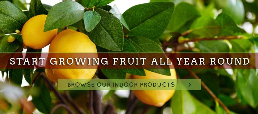 Green Barn Fruit Tree Nursery