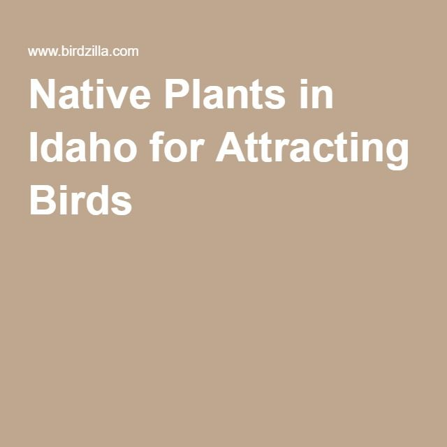 Native Plants In Idaho For Attracting Birds