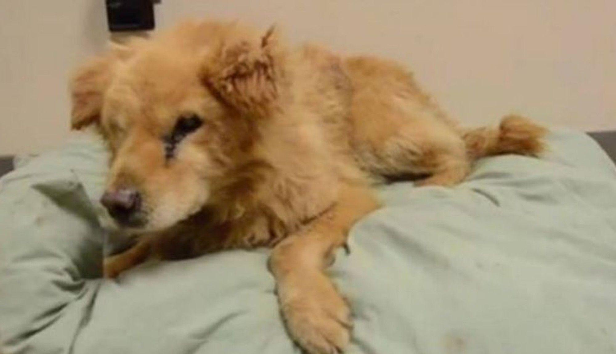 Blind, Deaf Dog Is So Scared In Shelter After His Owner Dies