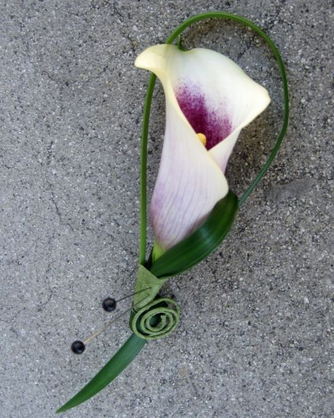 Love Picasso Calla Lily's. Possibly in bridesmaid's bouquets and for groomsmen