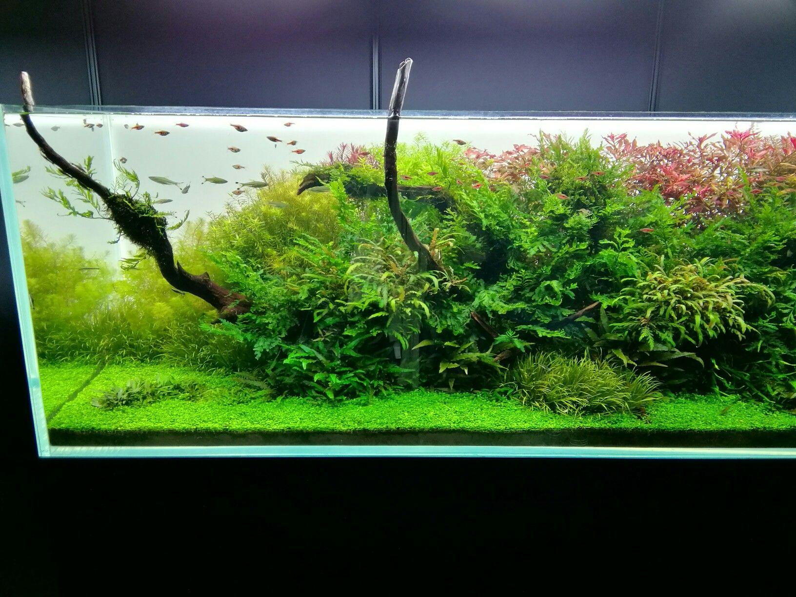 nature aquarium Takashi Amano 天野尚 Aquarium Pinterest