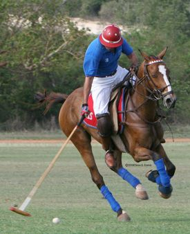polo horse pictures | Great Lakes and Michigan Horse Sport News