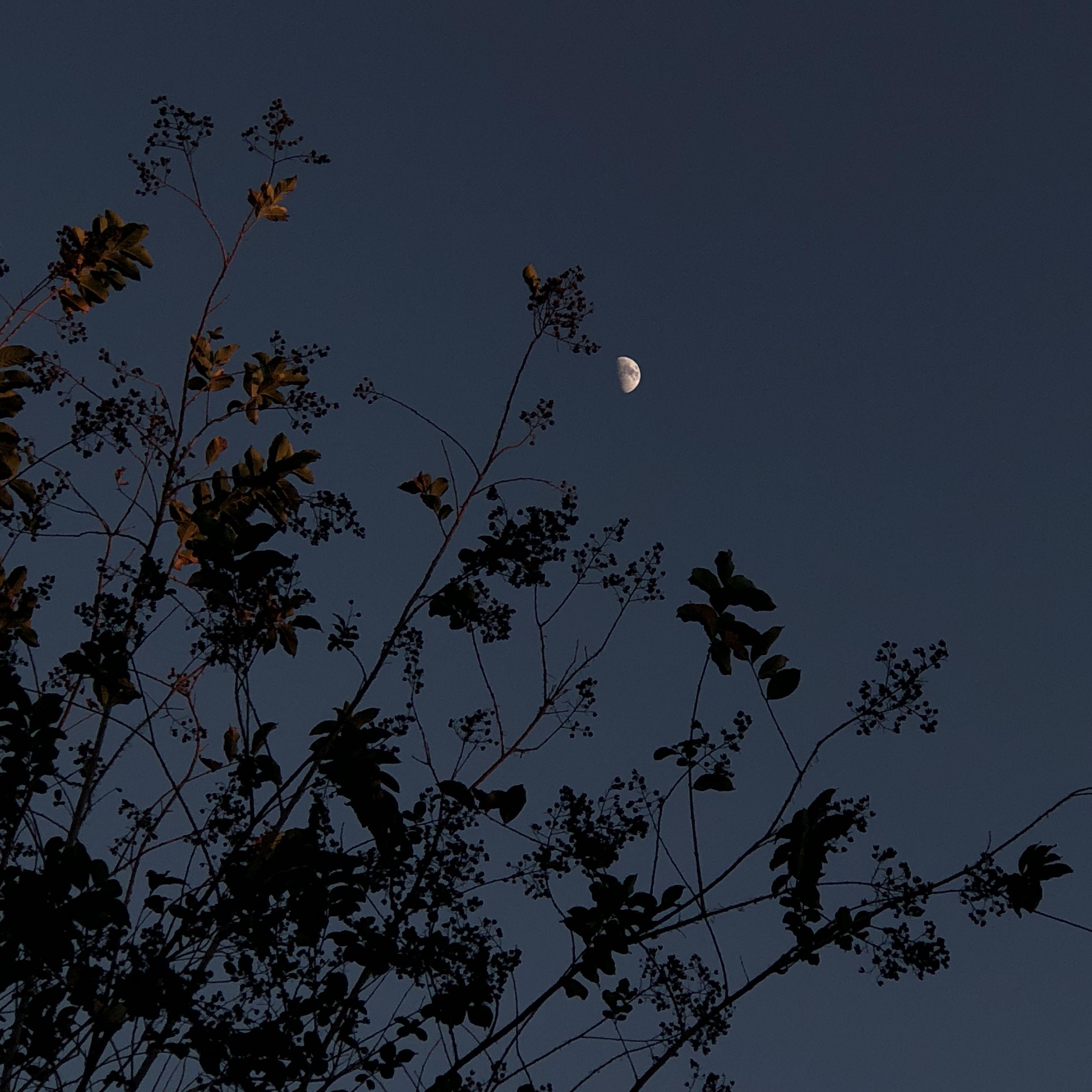 La Lune Sky Aesthetic Nature Aesthetic Night Aesthetic