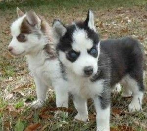 Dogs - Aiken, SC - Free Classified Ads   Animals   Pinterest