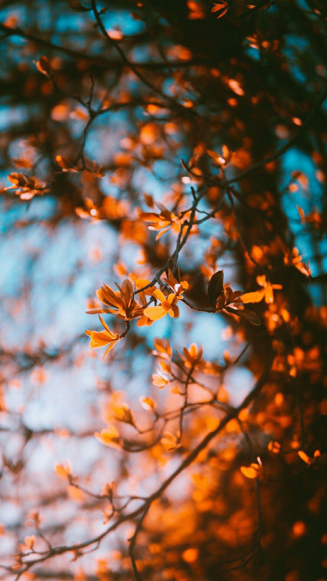 These Colors Outside Littlewonders Autumn Fotografie Achtergronden Achtergronden Wallpaper Achtergronden