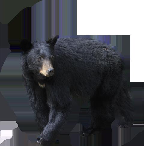 Pin Op Black Bear Mountain