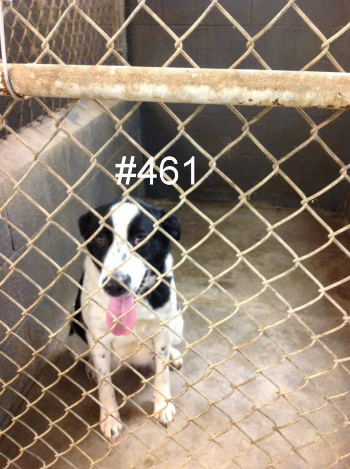 Pregnant Momma Please Save Her She Is Around One Or Two Years Old Logan County Pound Wv Very High Kill Shelter L Animals Friends Animals Cute Animals