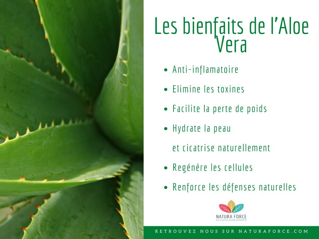 Aloe Vera Bienfaits Proprietes Utilisations Et Indications Natura Force En 2020 Aloes Aloe Vera Acide Amine Essentiel