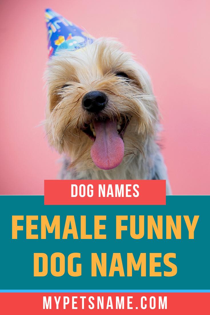 Female Funny Dog Names Funny Dog Names Dog Names Female Dog Names