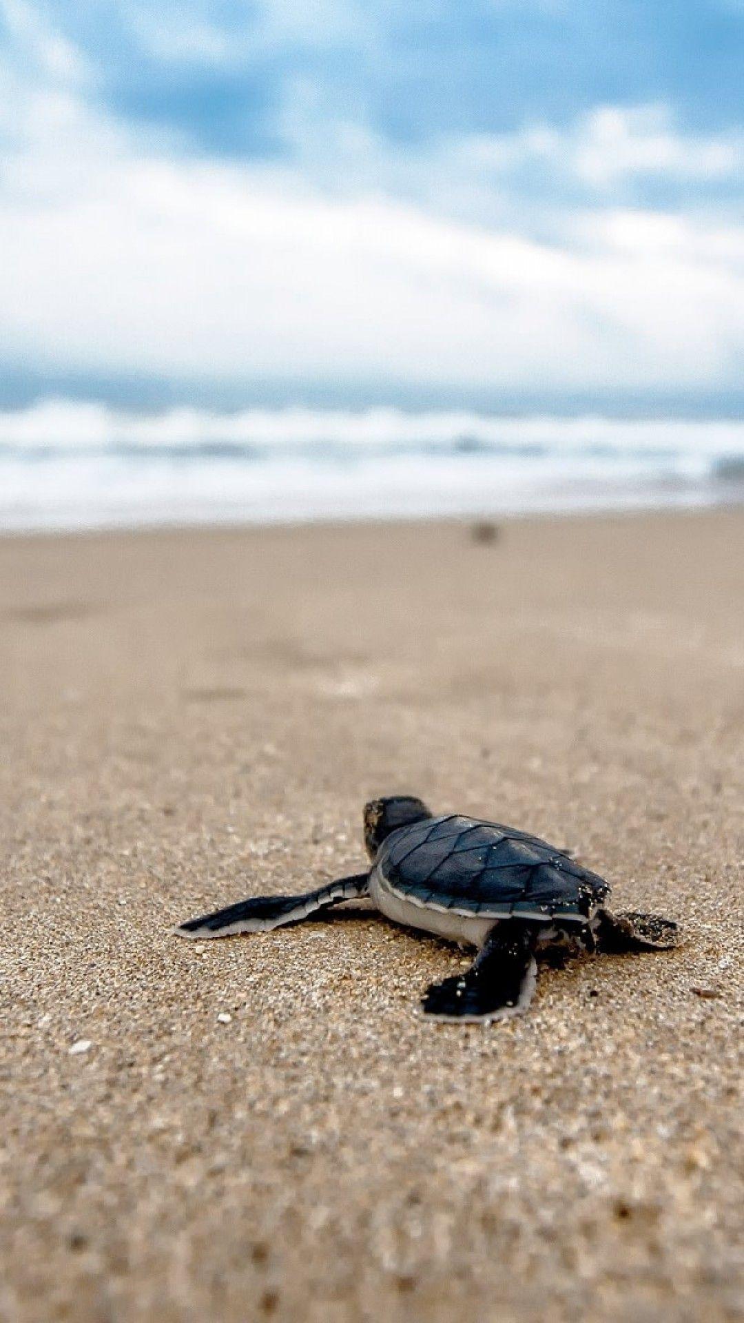 Turtle, Beach, Ocean, Clouds, Blurry, Waves, Sand Baby
