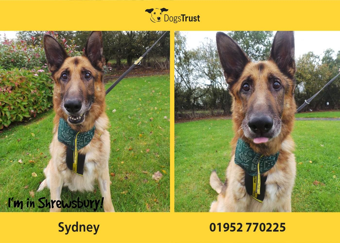 Sydney Is A Special Chap At Dogs Trust Shrewsbury Who Needs A