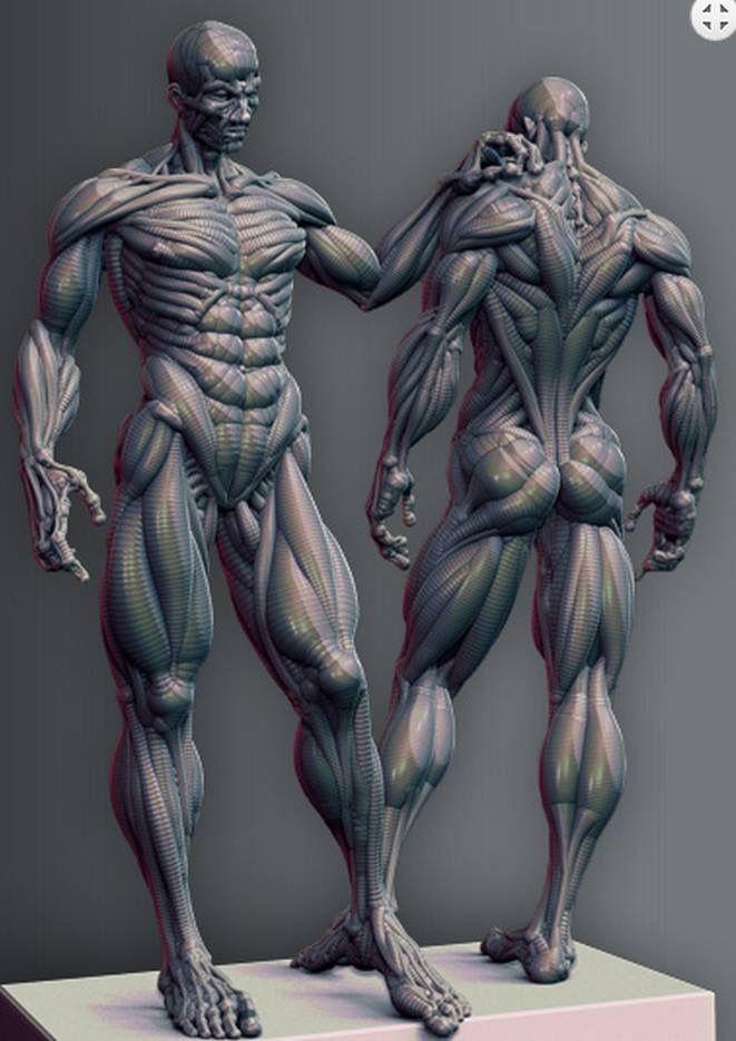 Pin de Gavrilov en Body | Pinterest | Anatomía, Escultura y Cuerpo ...