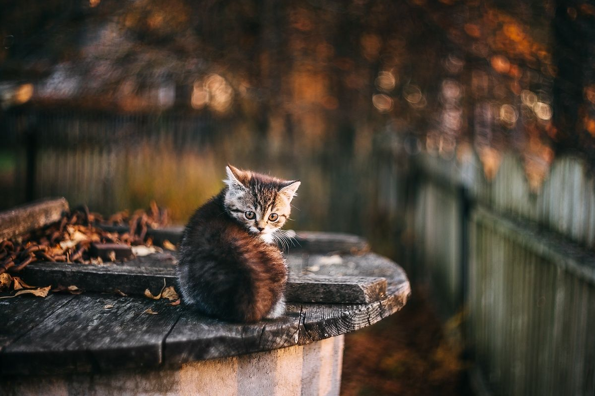 As the leaves turn by Frenchpapermoon Serious cat, Cats