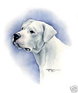Details about DOGO ARGENTINO Drawing Dog ART 11 X 14 Print