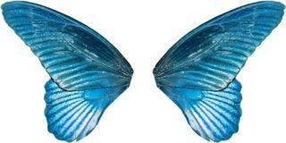 Yinjun7640 S Image Butterfly Wings Wings Wings Png