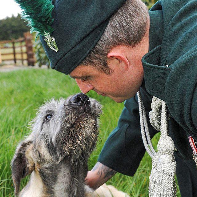 Meet Brian Boru X, The Royal Irish Regiment's new Regimental Mascot. He's an Irish Wolfhound.  #RIRISHWARRIOR #irishwolfhound #Army #RoyalIrish #dogsofinstagram #puppy #mascot