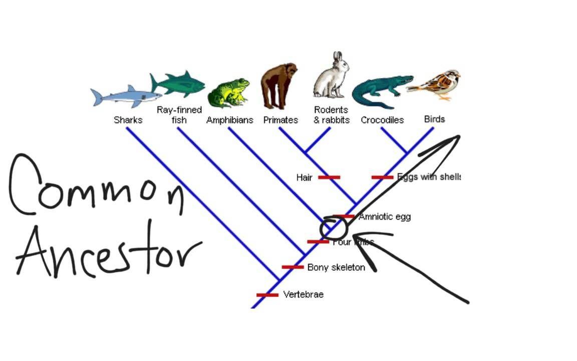 Cladogram Dichotomous Key Reading Worksheets Worksheet Template [ 720 x 1152 Pixel ]