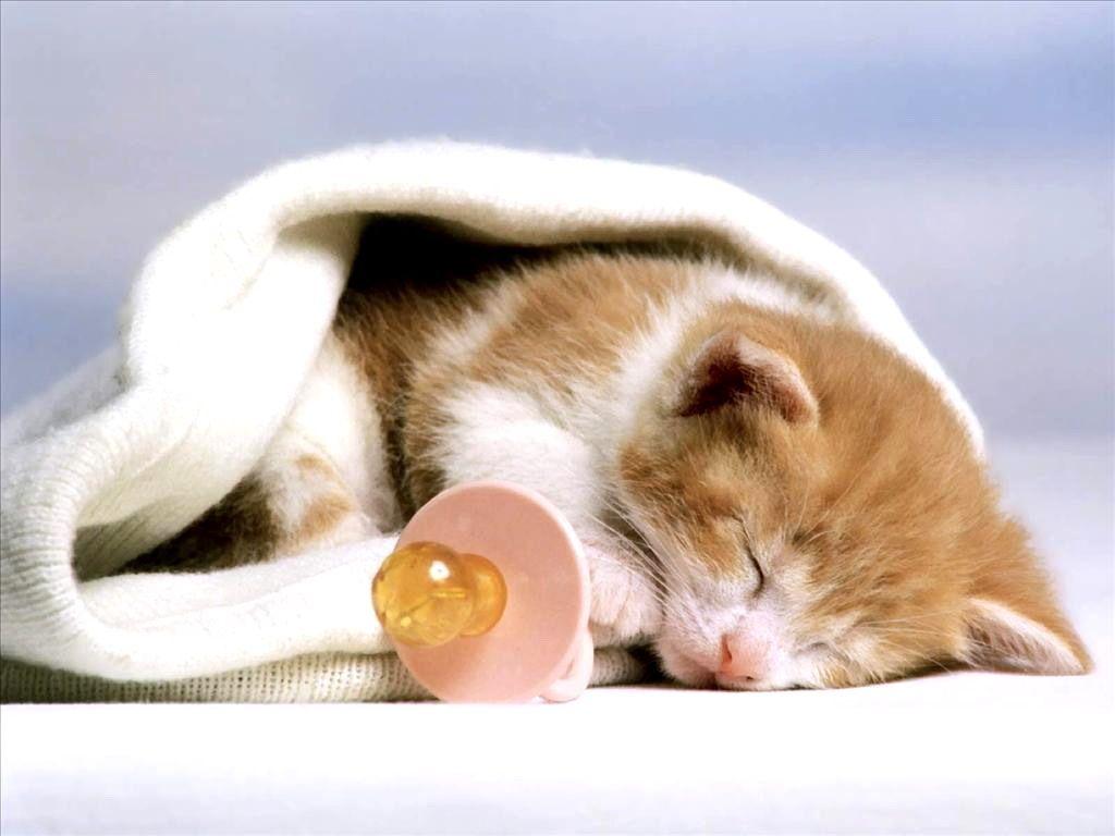 cats animals  / 1024x768 Wallpaper