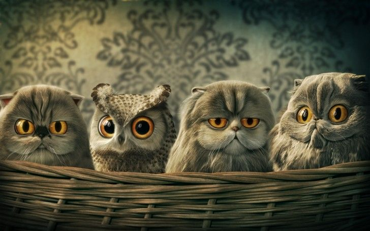 lomo owl funny illustration of 4 baby owls sitting in a basket digital painting by digital artist carlson woon on titan creative