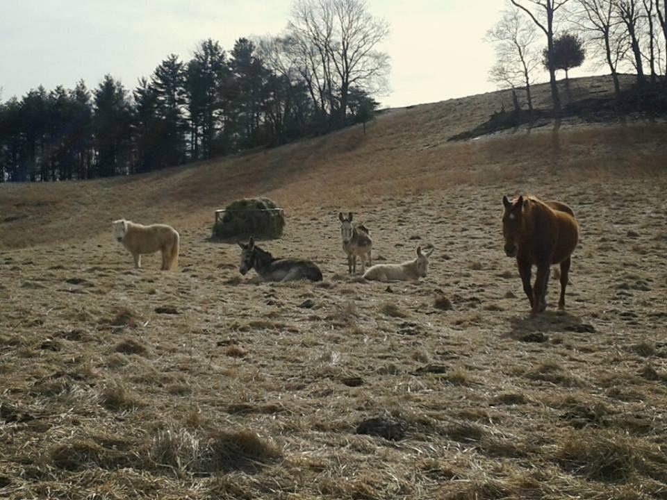 Park Art|My WordPress Blog_Animal Clinic Cedar Bluff Virginia