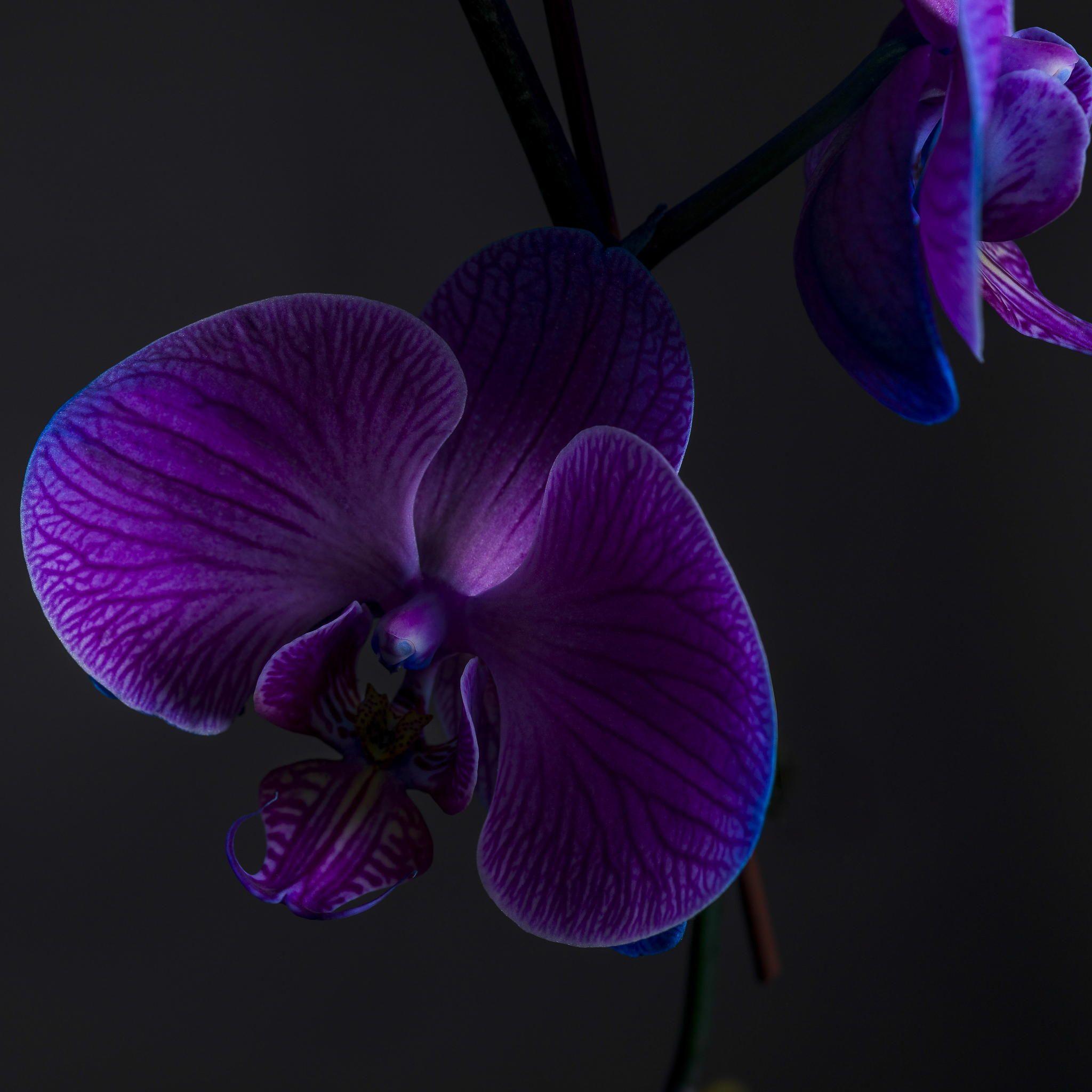 Orchid On Black Purple Orchids Orchids Wonderful Flowers