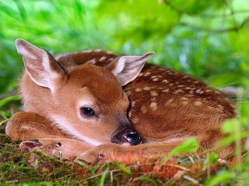 What Can I Feed Deer In My Backyard love this photo..good thing this baby is not in my backyard, i would