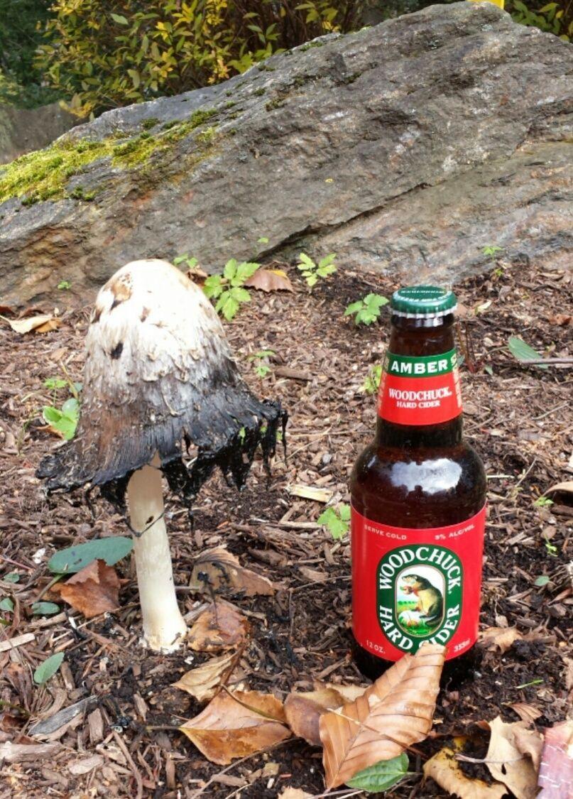 Mushroom and beer. Yummm