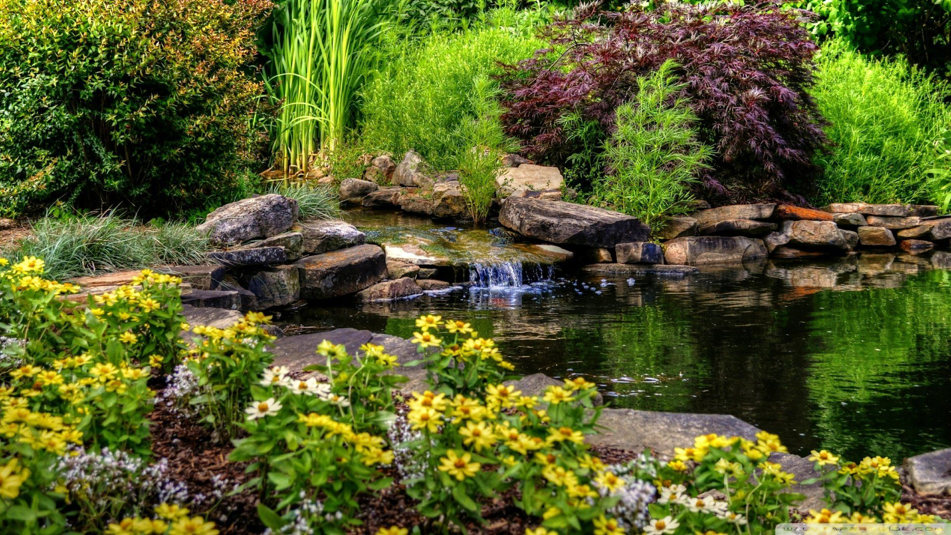 Small Pond With Flowers Wallpaper 1920X1080 Wallpaper - 1920X1080
