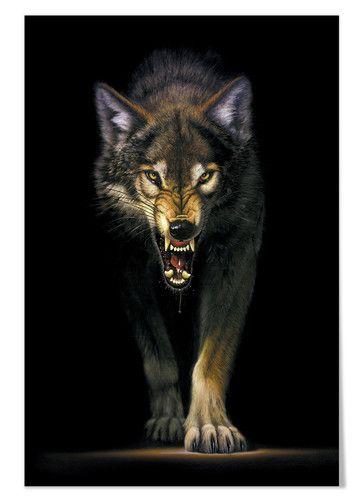 Photo of Chris Hiett – Heranschleichender Wolf