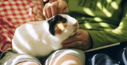 6 Of The Cheapest Pets To Own Cheap Pets Pets Personal Finance