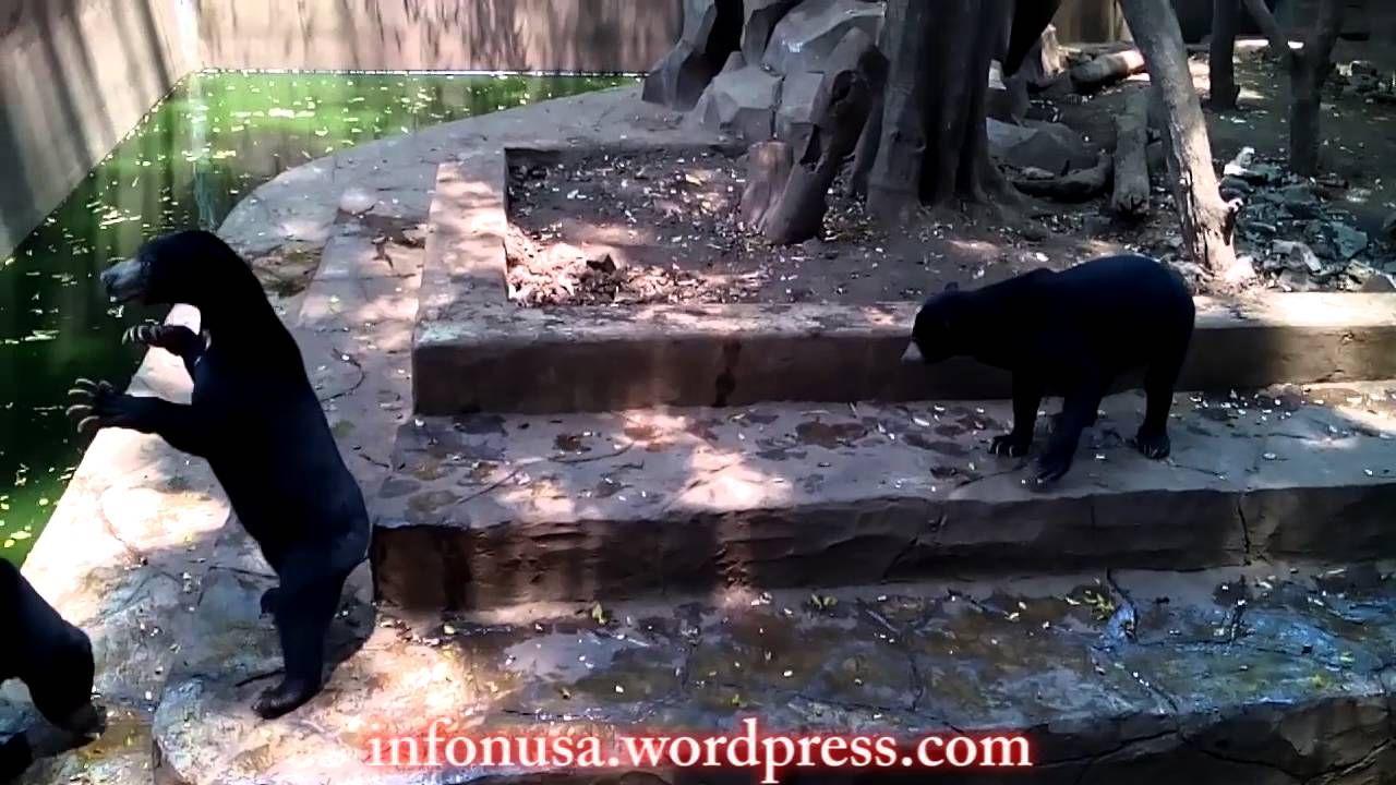 Lokasi Kebun Binatang Di Bandung