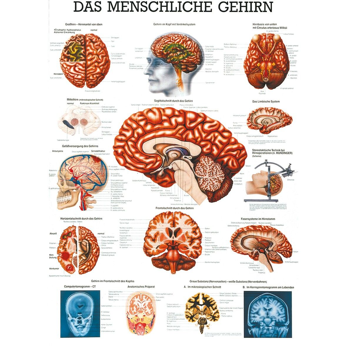 Pin von Karina auf Der menschliche Körper | Pinterest | der ...