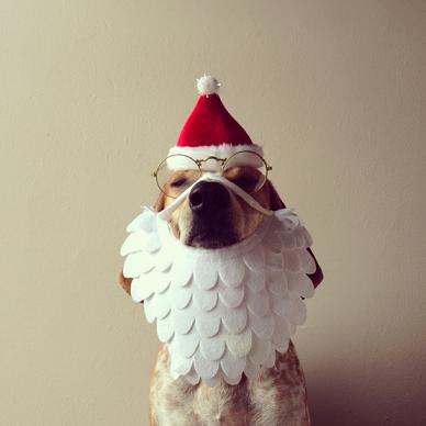 #PhotoBuzz Qui a dit que Noël n'était que pour les enfants ? ; ) La preuve en images …  Source de l'image : http://bit.ly/UhU7N3 #Humour #Noel #Photographie