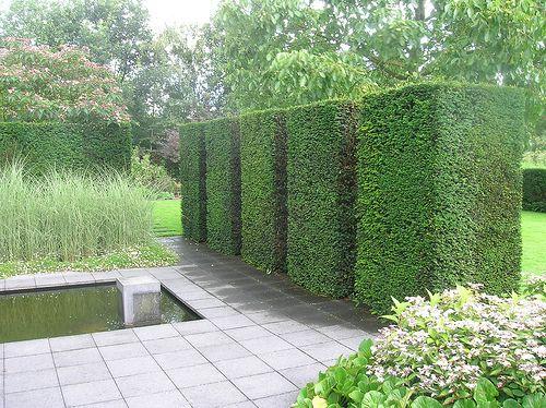 Dscn4282 mien ruys geknipte tuin taxus baccata topiary for Pflanzengestaltung garten