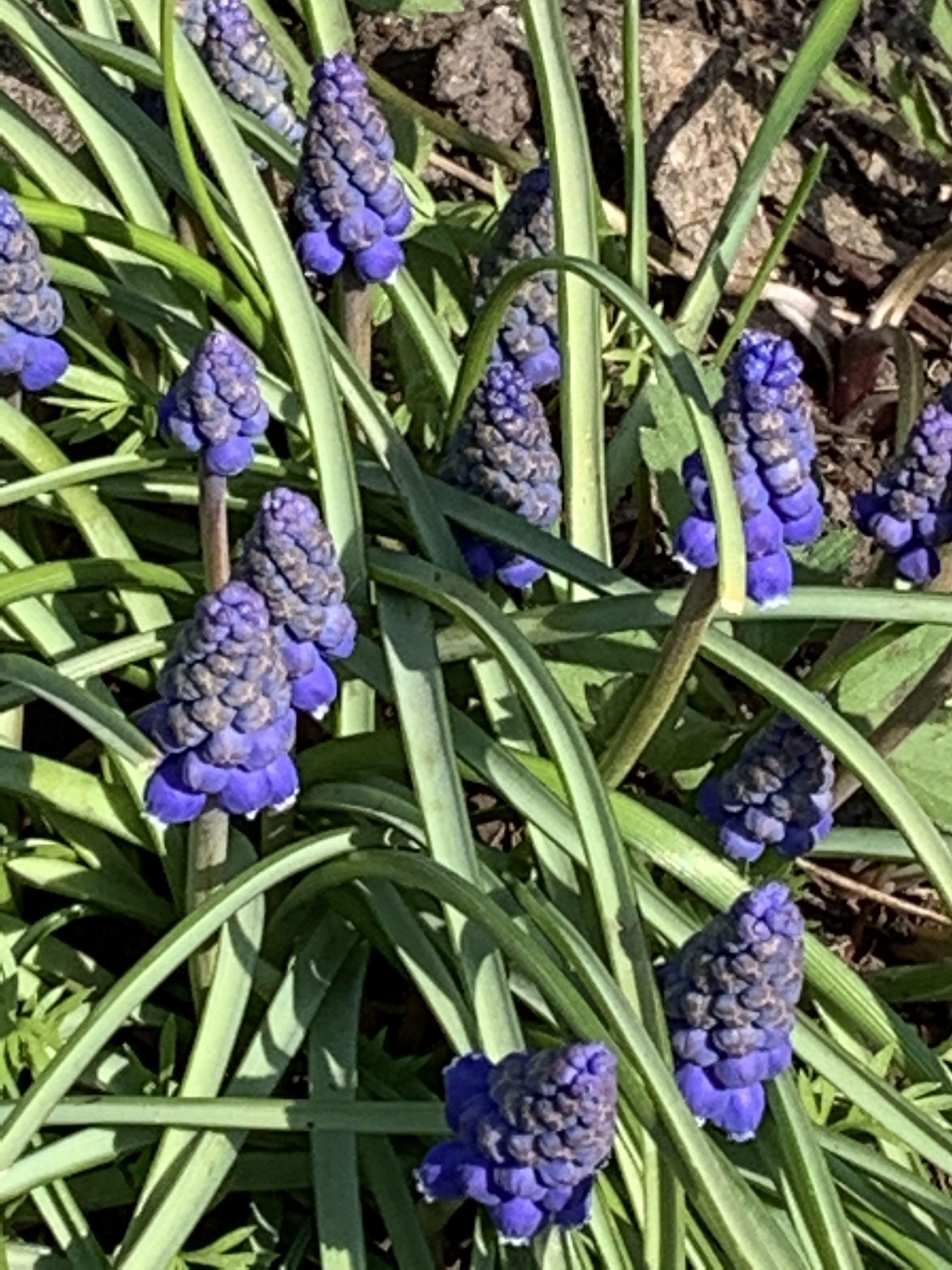 Blumen in unserem Garten.