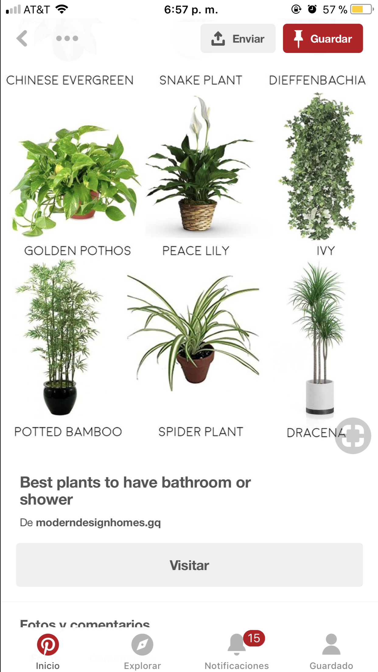Pin By Idalia On Plants In