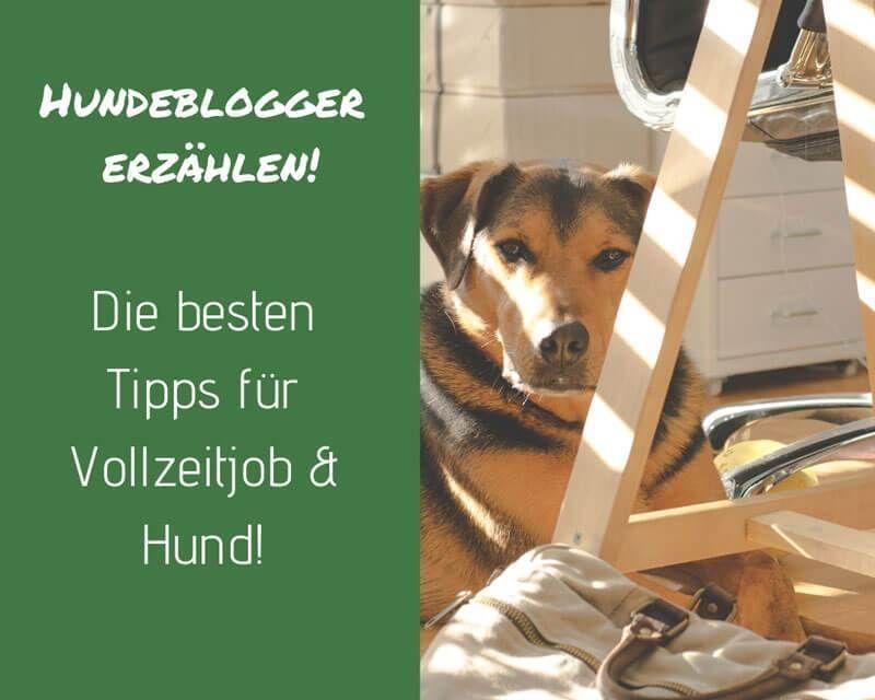 Die Besten Tipps Fur Vollzeitjob Hund Hundeblogger Erzahlen Job Hunde Tipps