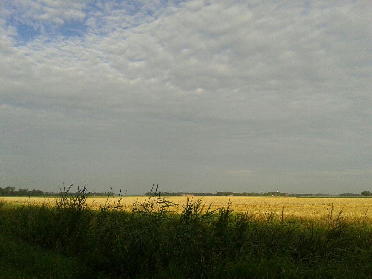 Zicht op de graanvelden Alikruikweg, Biddinghuizen.