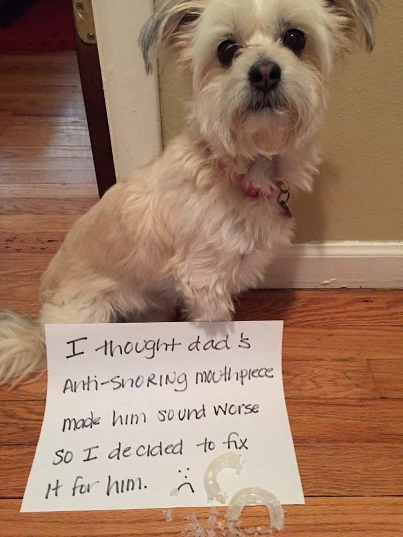 Pin By Liverpool Lass On Delightful Dogs Dog Shaming Photos