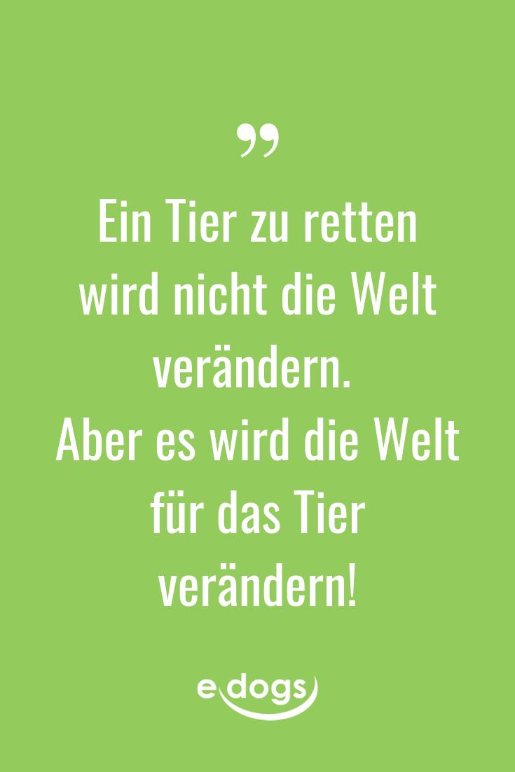 Lustige Hundesprüche, inspirierende Zitate, DIY und mehr rund um den Hund findest du bei edogs.de! - Spruch des Tages - Hundemensch