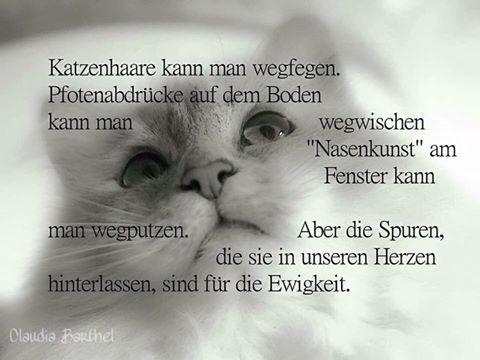 Tierschutz Aktiv Friesland Sprüche Katze Katzen Und