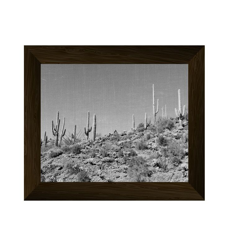 Desert wall art black and white cactus print cacti photography nature poster