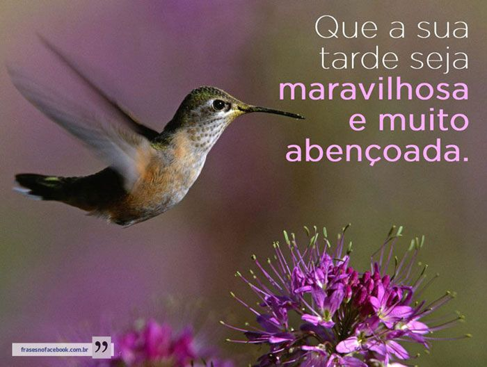 Imagens De Boa Tarde: Mensagens E Imagens Para Facebook » Recado Alegre
