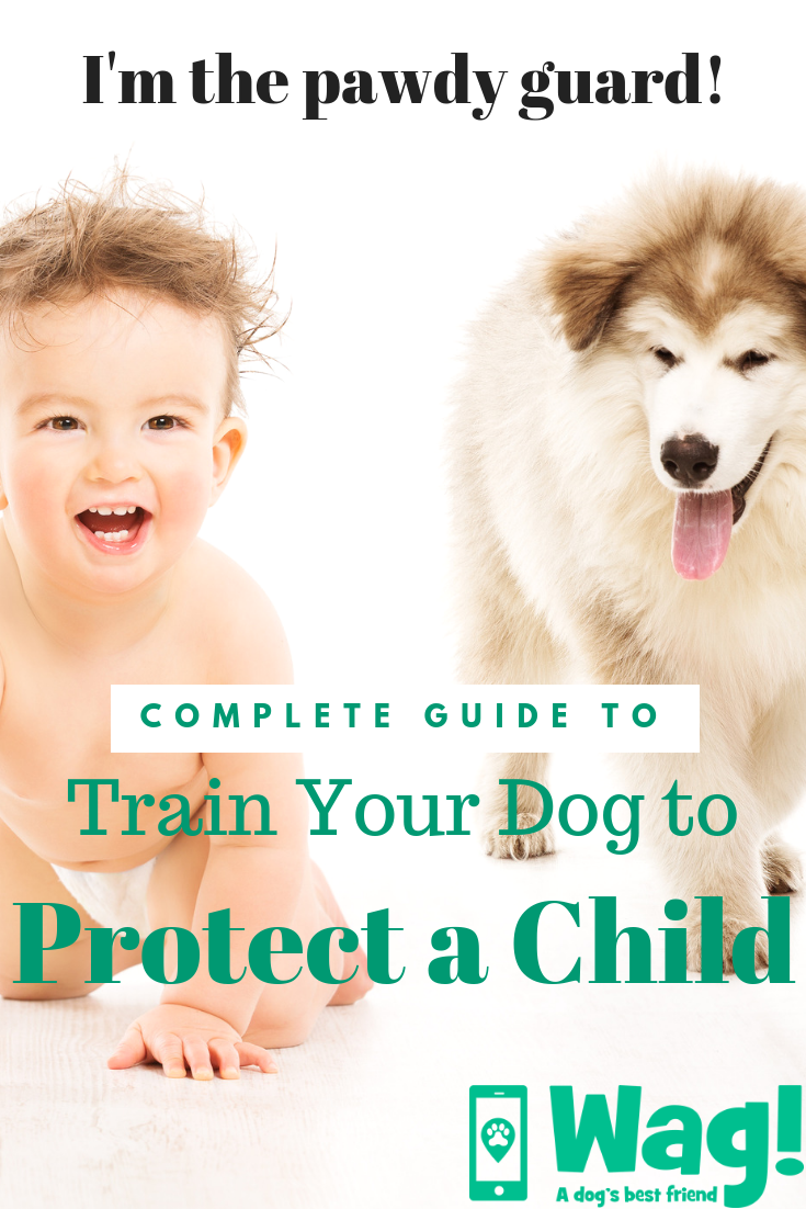 How to Train Your Dog to Protect a Child | Dog Training