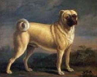 Pugs Are Awesome Compilation Mops Hund Portraits Mops Kunst